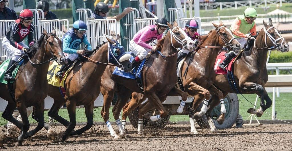 horse racing bookmakers australia