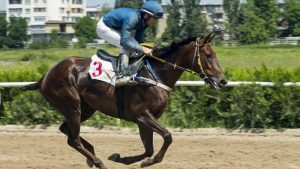 best odds in horse racing