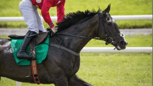 horse racing best odds