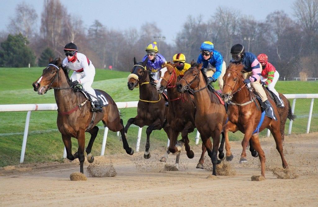 best horse racing software