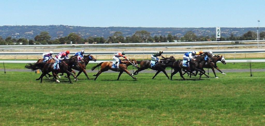 horse racing odds uk